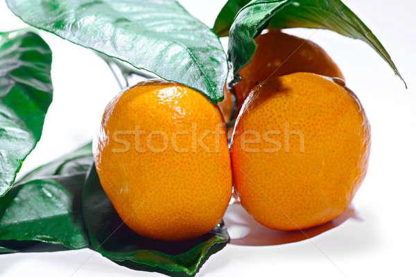 Three  orange ripe mandarin on a branch with leaves. Isolated on Stock photo © artfotoss