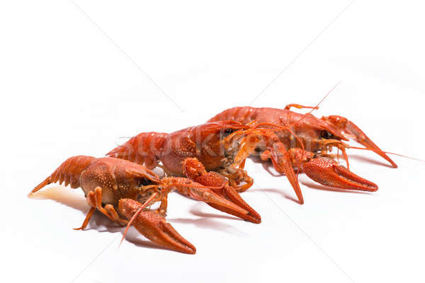 Stock photo: Boiled crawfish is isolated on a white background