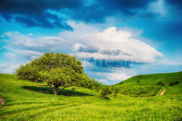 Stock photo: Summer landscape with few trees on the grassy hillside meadow ne