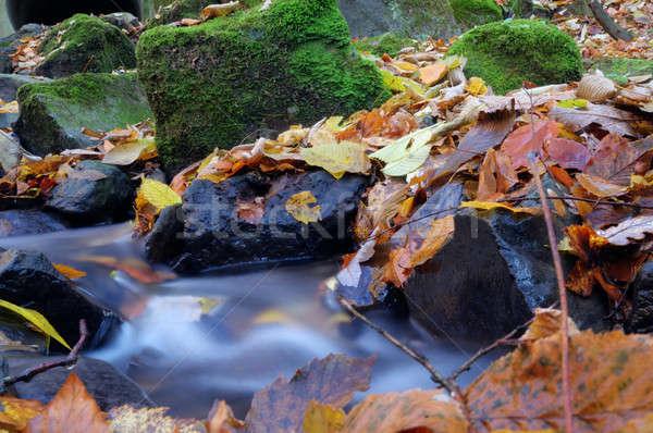 Lassú mozog folyam erdő ki őszi színek Stock fotó © artfotoss