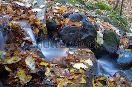 Folyam folyik kövek fedett növények levelek Stock fotó © artfotoss