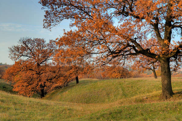ősz tájkép fa erdő nap levél Stock fotó © artfotoss