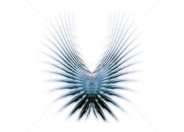 Blue wings Stock photo © Artida