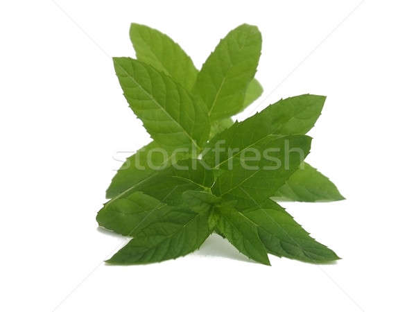 Fresh picked mint sprig Stock photo © Artida