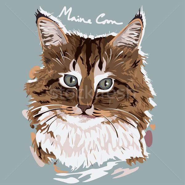 Maine festmény poszter portré állat rajz Stock fotó © artisticco