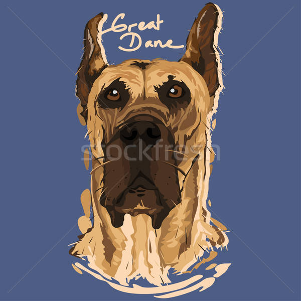 Great Dane Painting Poster Stock photo © artisticco