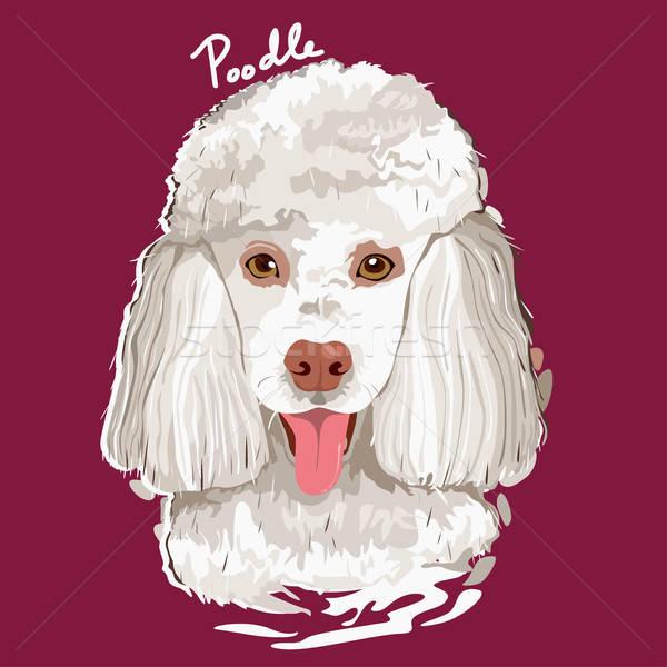 Barboncino pittura poster ritratto animale disegno Foto d'archivio © artisticco
