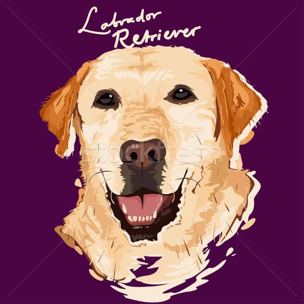 Labrador retriever boyama poster portre hayvan çizim Stok fotoğraf © artisticco