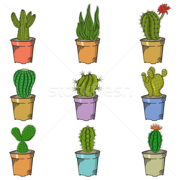 Stock photo: Different Types of Cactus