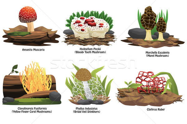 Different types of mushroom  Stock photo © artisticco