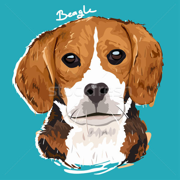 Beagle Painting Poster Stock photo © artisticco