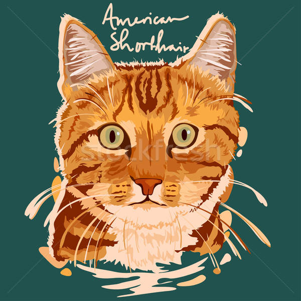 Americano shorthair pintura cartaz animal Foto stock © artisticco