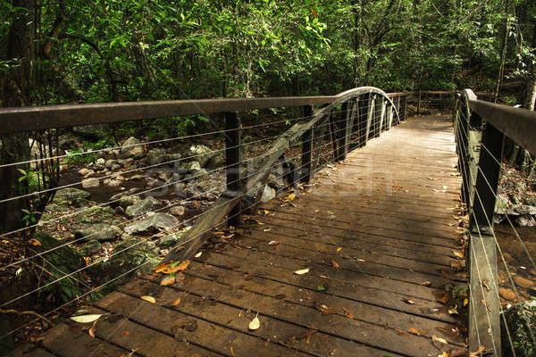 Naturale ponte torrente acqua foresta foglia Foto d'archivio © artistrobd