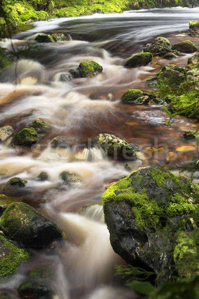 Dere tazmanya hızlı çalışma dere Stok fotoğraf © artistrobd