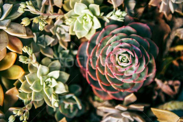 Flowers in the garden Stock photo © artistrobd