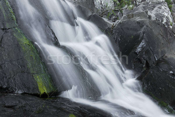 Cedar Creek Falls in Mount Tamborine Stock photo © artistrobd