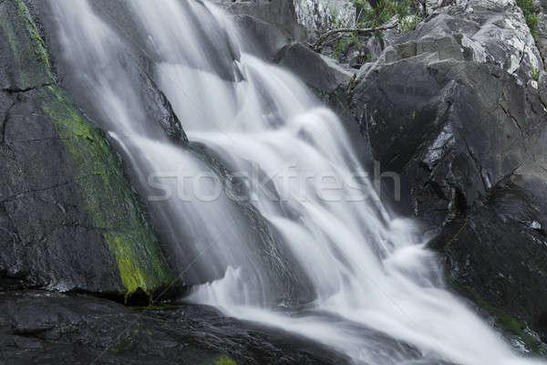 ヒマラヤスギ 小川 滝 公園 スプラッシュ 新鮮な ストックフォト © artistrobd