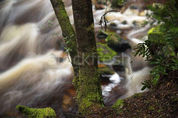 Newell Creek in Tasmania Stock photo © artistrobd