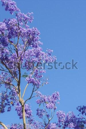 дерево красивой глубокий Purple Сток-фото © artistrobd