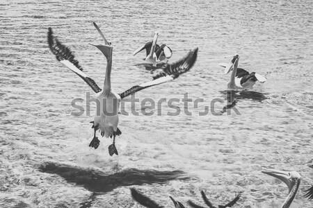 Water dag eiland queensland west Stockfoto © artistrobd