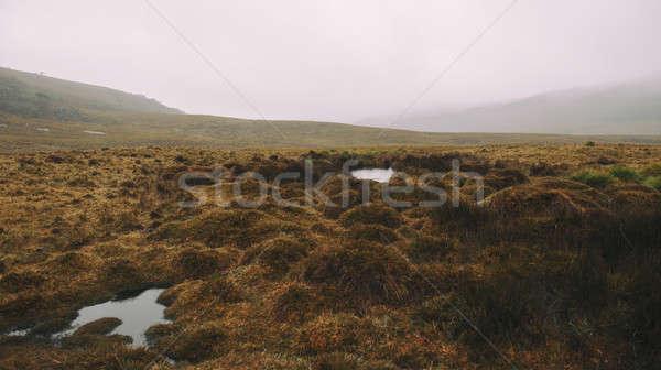 Foggy field on the mountain Stock photo © artistrobd