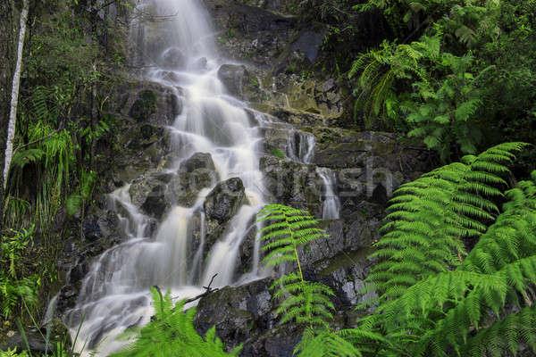 Wasserfall Wiege Berg Tasmanien Australien Wasser Stock foto © artistrobd
