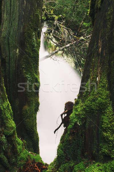 Culla montagna tasmania pesante precipitazioni acqua Foto d'archivio © artistrobd
