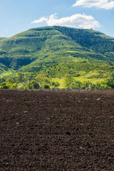 Mezőgazdasági gazdálkodás mező Queensland délután égbolt Stock fotó © artistrobd