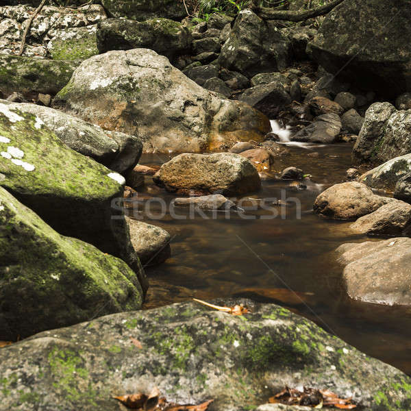 Natural Bridge Creek Stock photo © artistrobd