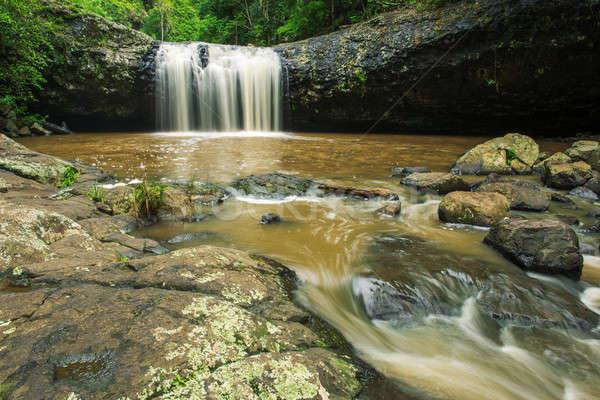 Labbro queensland Australia foglia bellezza viaggio Foto d'archivio © artistrobd