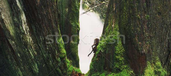 Wieg berg tasmanië zwaar regenval water Stockfoto © artistrobd