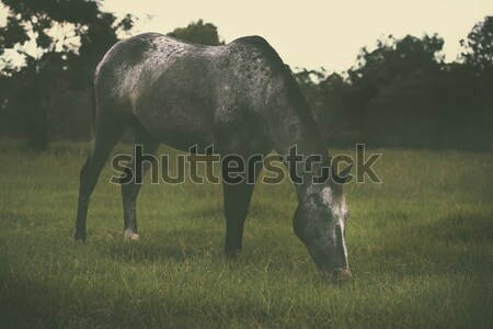Outback agricultural and farming field. Stock photo © artistrobd