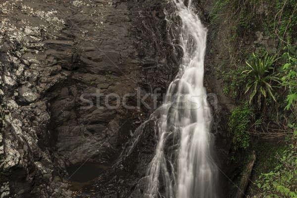 Naturale ponte cascata acqua foresta foglia Foto d'archivio © artistrobd