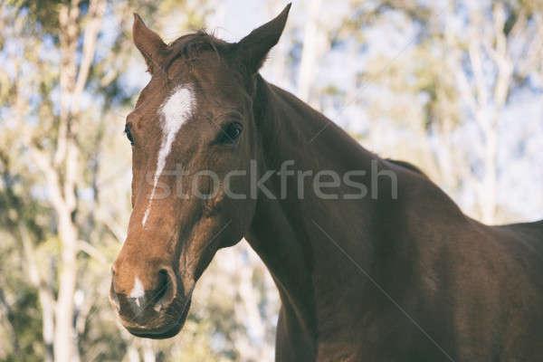 Cheval oeil été tête animaux accent Photo stock © artistrobd