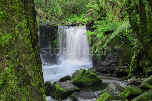 Horseshoe Falls in Mount Field National Park Stock photo © artistrobd