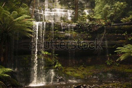 Purlingbrook Falls in Springbrook Stock photo © artistrobd