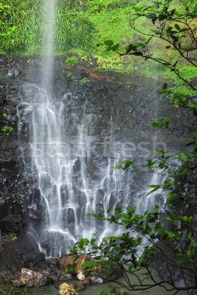 Purlingbrook Falls in Springbrook Stock photo © artistrobd