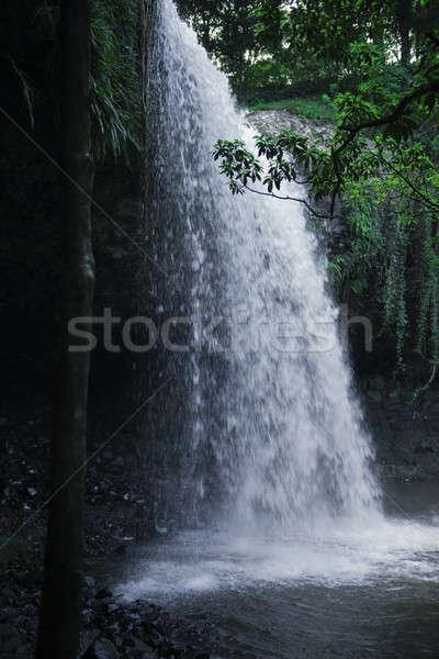 New south wales mooie dag natuur blad schoonheid Stockfoto © artistrobd