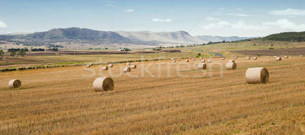 Rolniczy dziedzinie queensland popołudnie niebo Zdjęcia stock © artistrobd