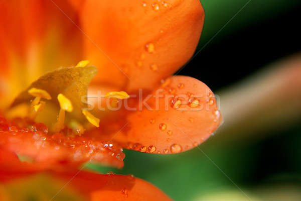 Flower in the garden Stock photo © artistrobd