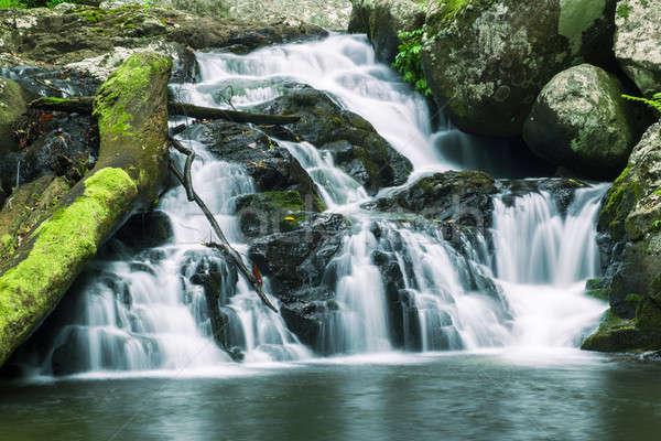 Bella cascata parco queensland Australia foresta Foto d'archivio © artistrobd