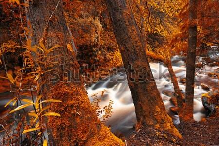 Naturale ponte cascata queensland rosso fogliame Foto d'archivio © artistrobd
