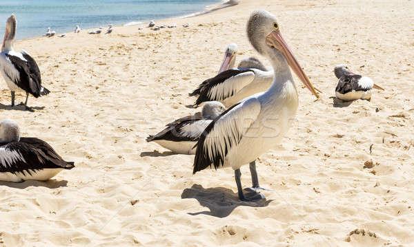 Madarak pihen tengerpart egyéb nap sziget Stock fotó © artistrobd