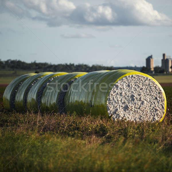 Katoen queensland Geel plastic industrie boerderij Stockfoto © artistrobd