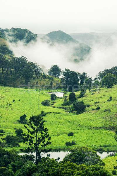 árvores montanhas queensland nublado chuvoso dia Foto stock © artistrobd