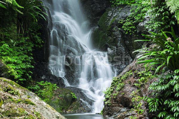 Beautiful Waterfall  Stock photo © artistrobd