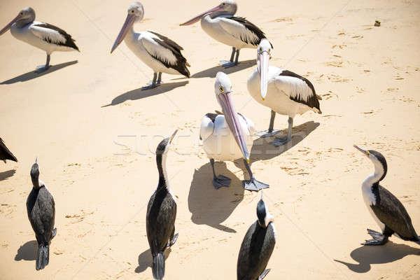 Birds resting on the beach Stock photo © artistrobd