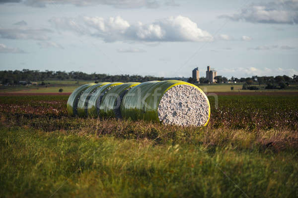 Bales of cotton in Oakey, Queensland Stock photo © artistrobd