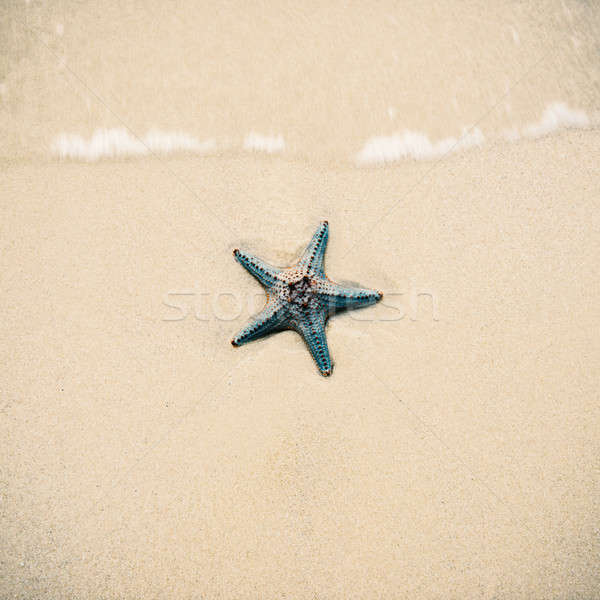 Starfish on the beach sand. Close up Stock photo © artistrobd