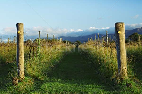 Vignoble queensland après-midi nature beauté été Photo stock © artistrobd